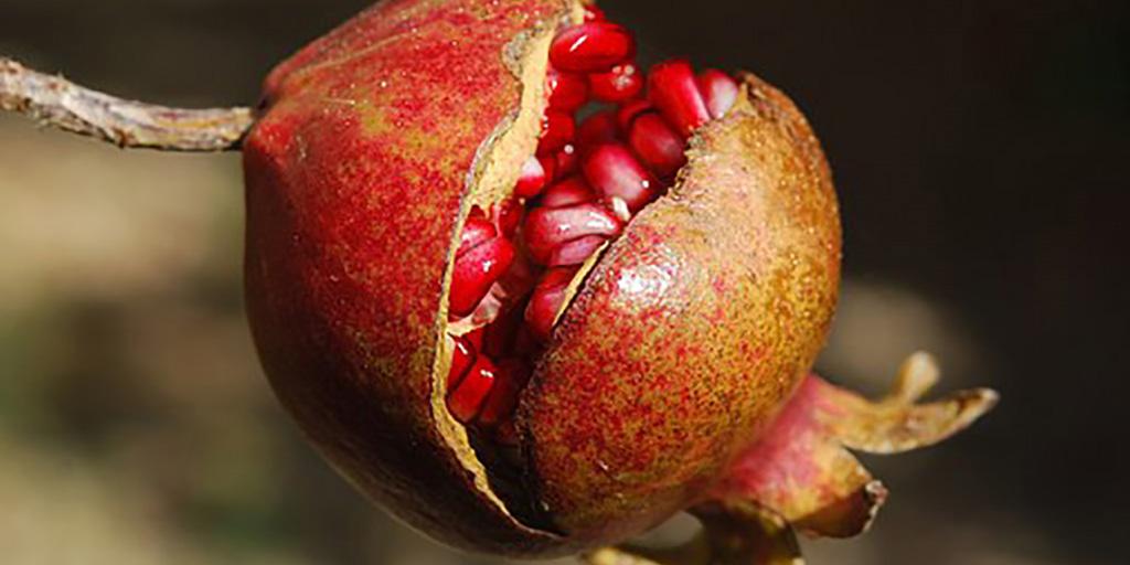 Frutas del mes de Noviembre